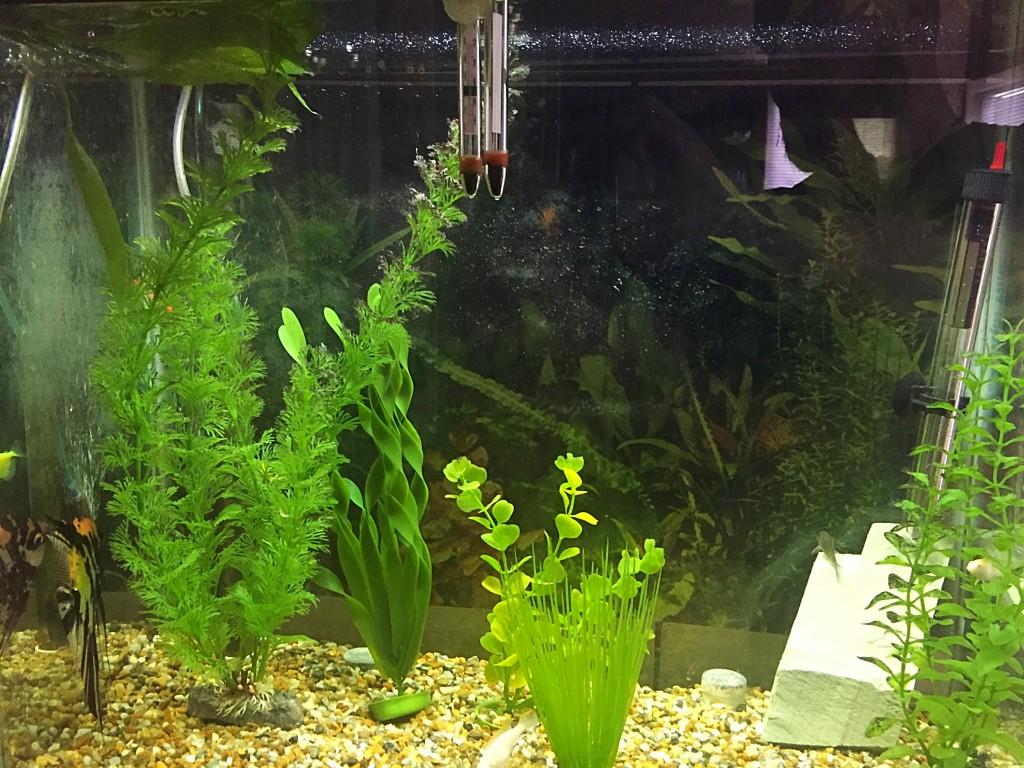 How to get rid of black algae in an aquarium - Ben Lobaugh